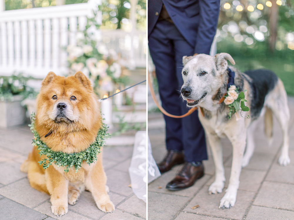 A Norland Estate Wedding Calgary wedding photographer the ceremony ring dogs