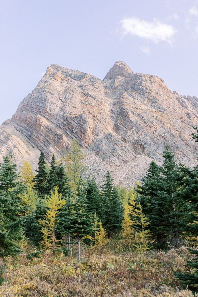 Banff fall engagement session larches