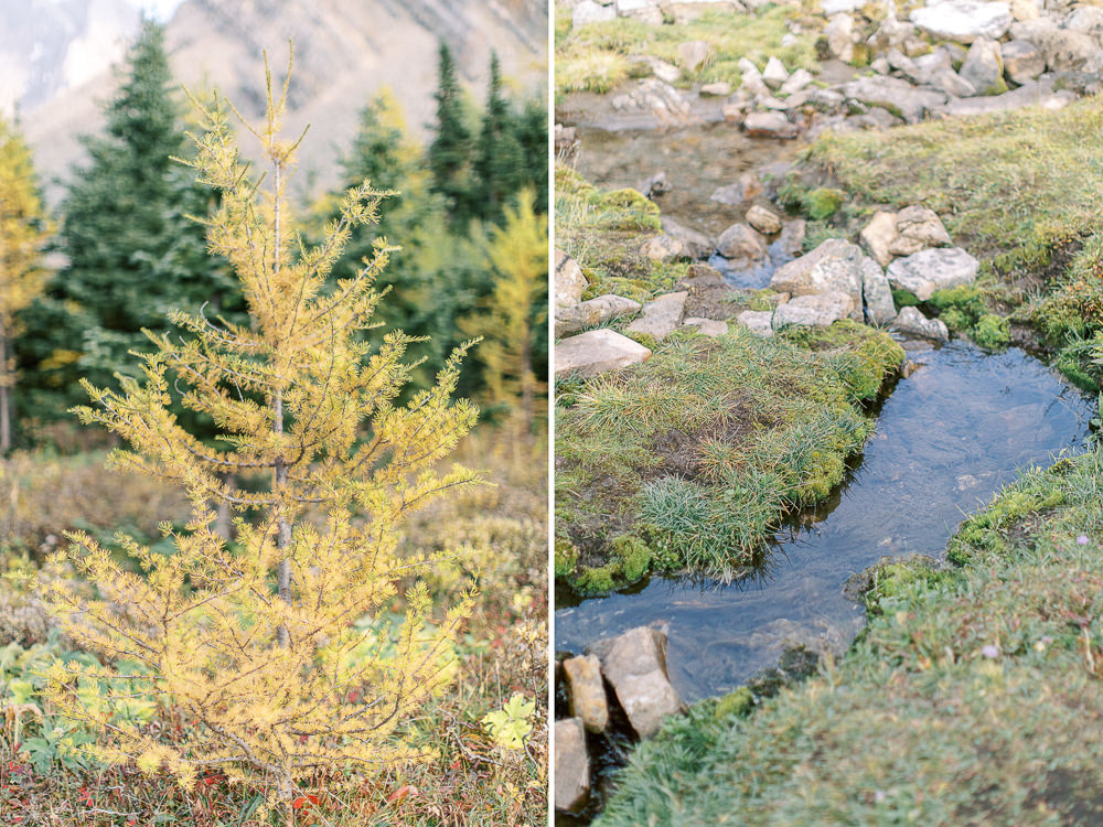 Banff fall engagement session Highwood pass